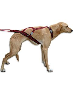 Dog Scooter Harness